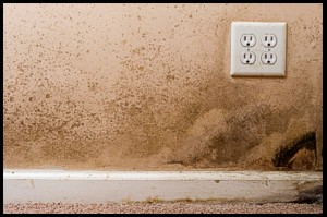 Mold Remediation/Sanitization