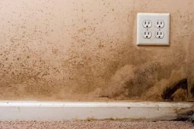 Mold Remediation / Sanitization